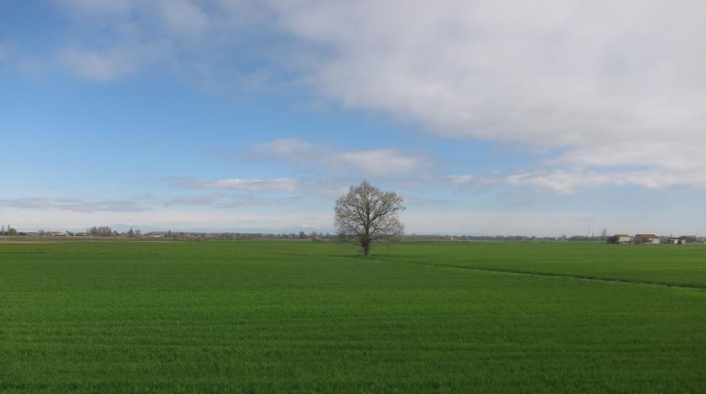 Un albero solitario sperduto nella grande campagna ferrarese